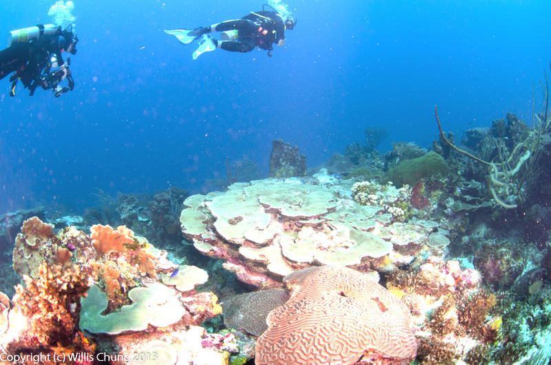I had the 10.5mm fisheye on my camera, the right choice for very vibrant coral