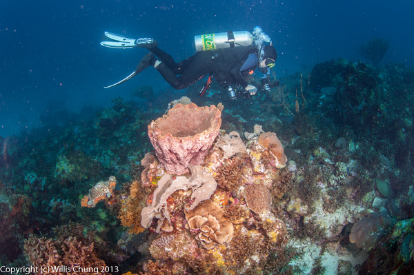 Different coral and sponge configurations here by Willis...