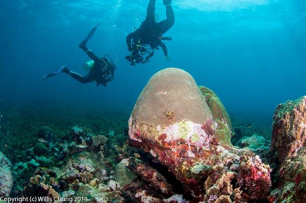 Coral still looks healthy, no dead areas, no algae by...