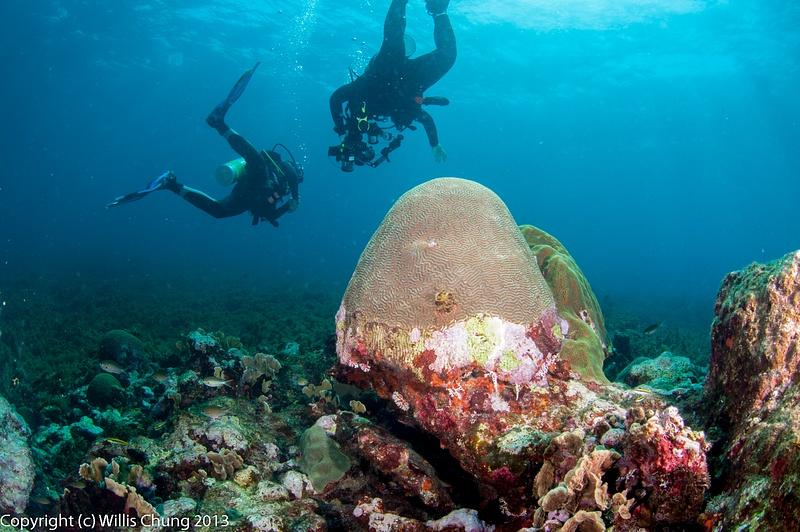 Coral still looks healthy, no dead areas, no algae