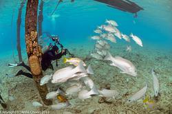2014Mar Bonaire Scuba Fisheye 10.5mm