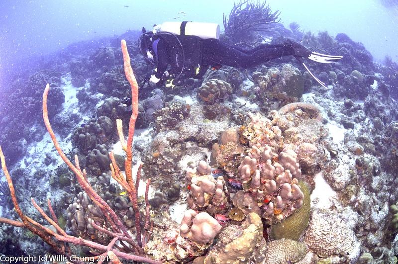 More blackbar soldierfish hiding from Ben