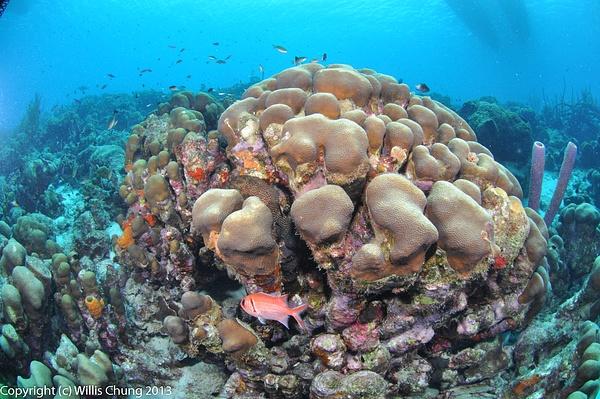 A blackbar soldierfish avoids me by Willis Chung