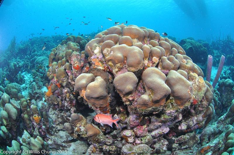 A blackbar soldierfish avoids me