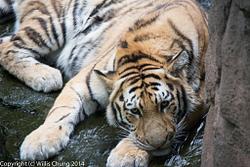 2014July Pittsburgh Zoo