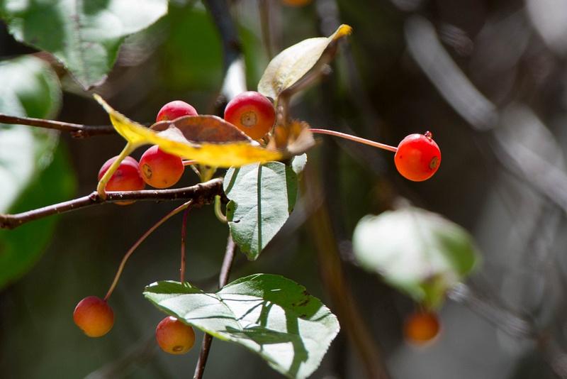 Cherries in midmorning light, ISO 200