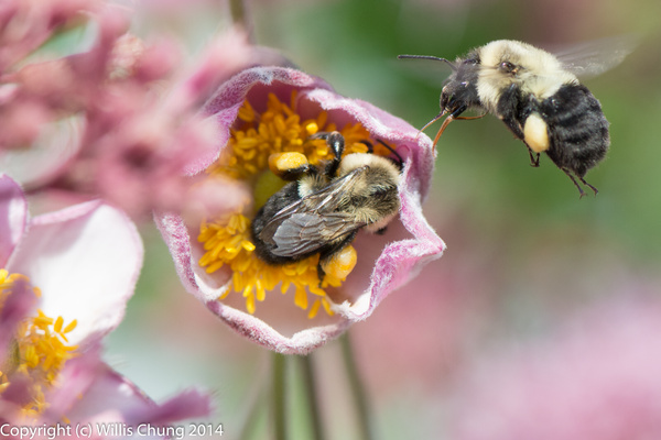 This particular blossom was very attractive to the bees...