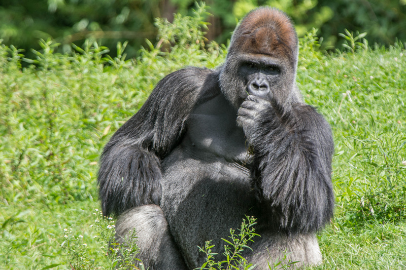 The proverbial 600 pound gorilla