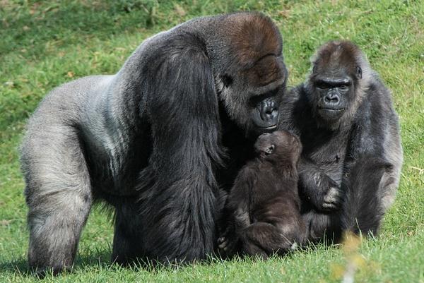 2014Nov Pittsburgh Zoo by Willis Chung