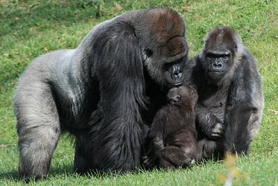 2014Nov Pittsburgh Zoo