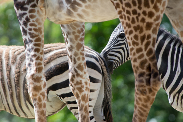 Stripes and spots by Willis Chung