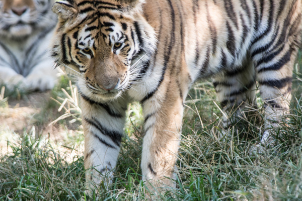 2014Sept Pittsburgh Zoo by Willis Chung by Willis Chung
