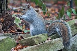 2014Dec Squirrel picnic in the backyard
