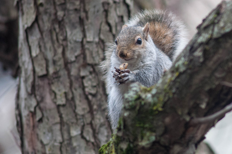 As I was eating lunch, I spotted this squirrel eating