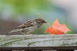 2014Oct Fall Cherries and Birds D800e