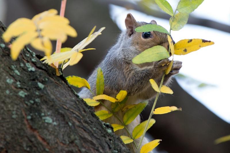 Bashful squirrel