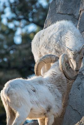 2014Dec Denver Zoo