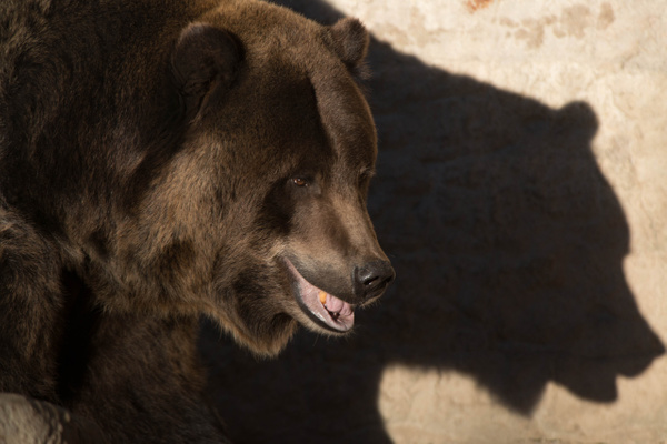 The shadow looks just like a bear by Willis Chung