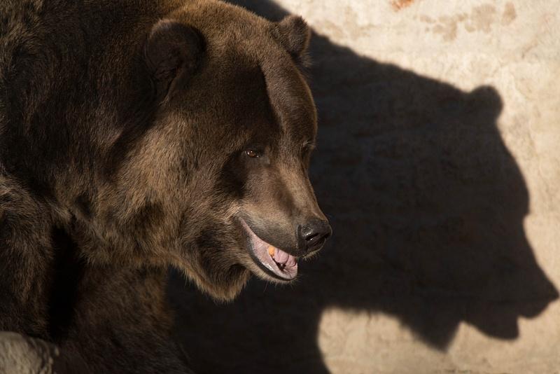The shadow looks just like a bear