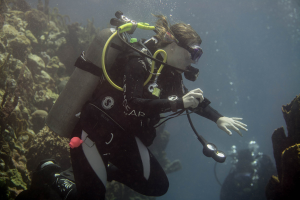 2015Mar Dominica Dive 4 Coral Gardens by Willis Chung by...