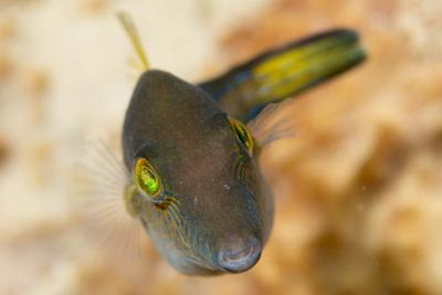 2015Mar Dominica Dive 8: Champagne Reef