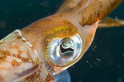 2015Apr Dominica Dive 10: Champagne Reef