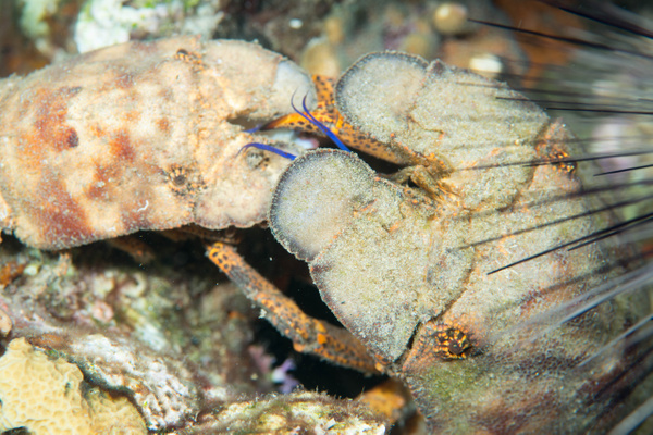 2015Apr Dominica Dive 15: Lab'ym - Dangleben's North by...
