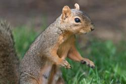 2015 Aug Denver Squirrels