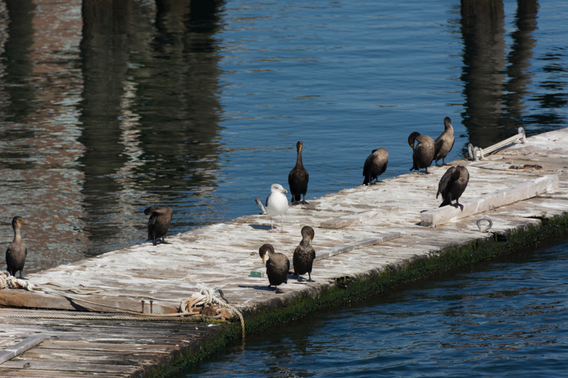This must be the cormorant convention center