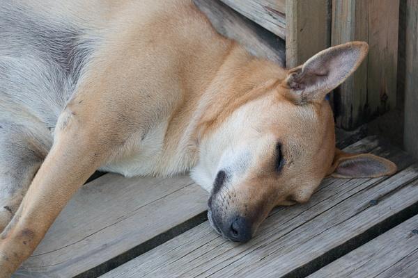 A sleeping dog by Willis Chung