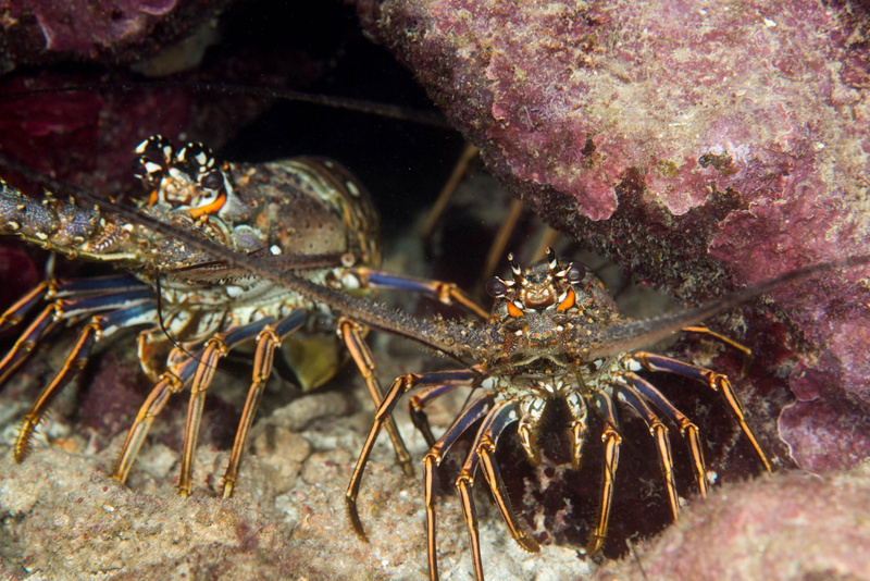 Lobsters galore! Near start platform