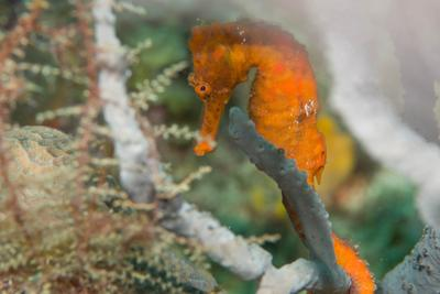 2016Mar Roatan Dive 5: First Bight