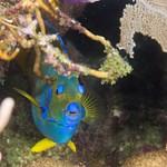 2016Mar Roatan Dive 11: Ventana Del