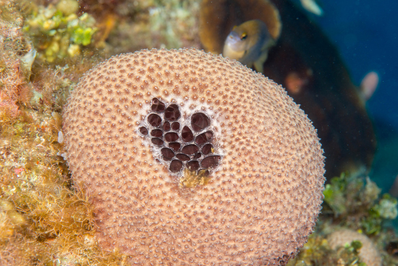 This might be a stinker sponge, watched over by a damselfish