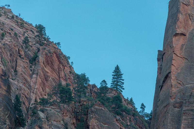 Trees on the eastern ridge