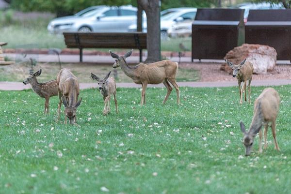 More mule deer families arriving. by Willis Chung