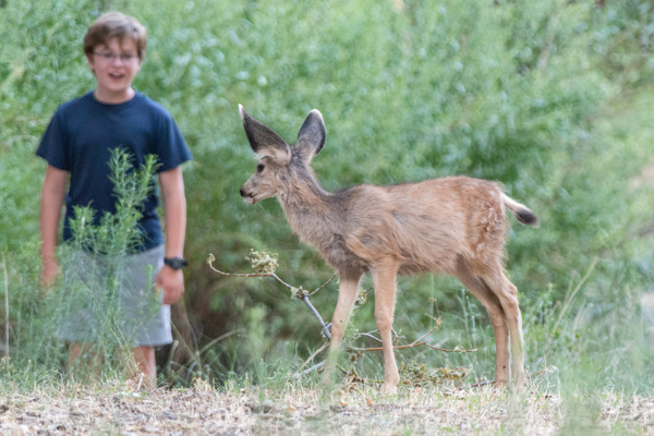 Fawn and boy check each other out from a distance. by...