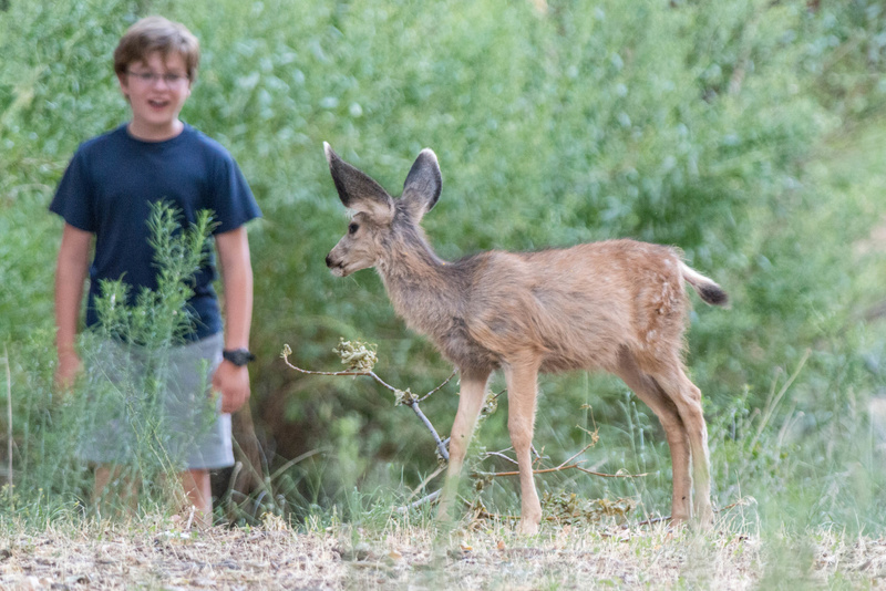 Fawn and boy check each other out from a distance.
