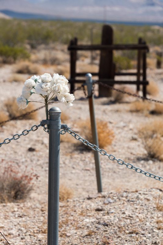 Another view of the flowers at Mr. Gregory's plot.