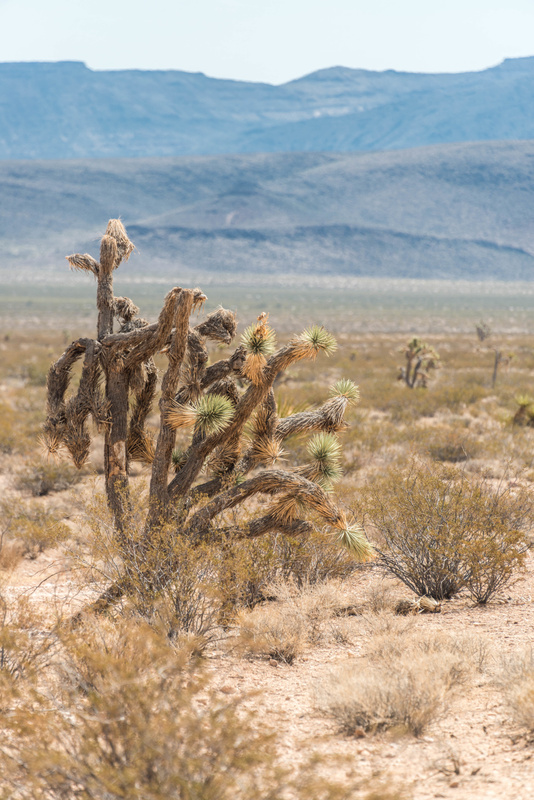 Cacti in the distance.