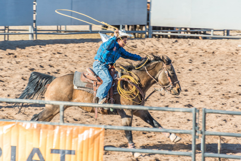 Horse and rider working as a team