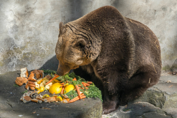 The sun came out from behind the clouds. Bear eating...