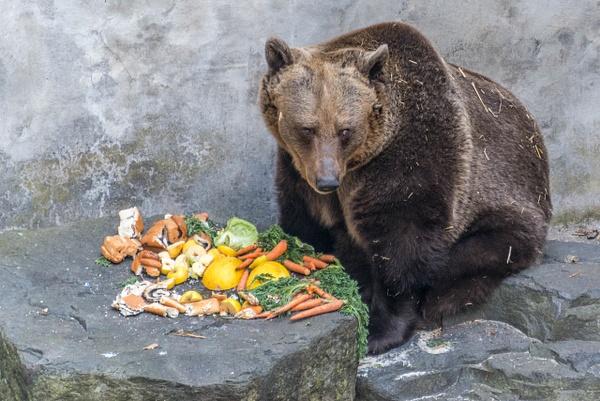 Shy bear by Willis Chung