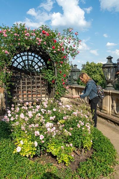 Day 7 Great Fürstenberg Garden by Willis Chung