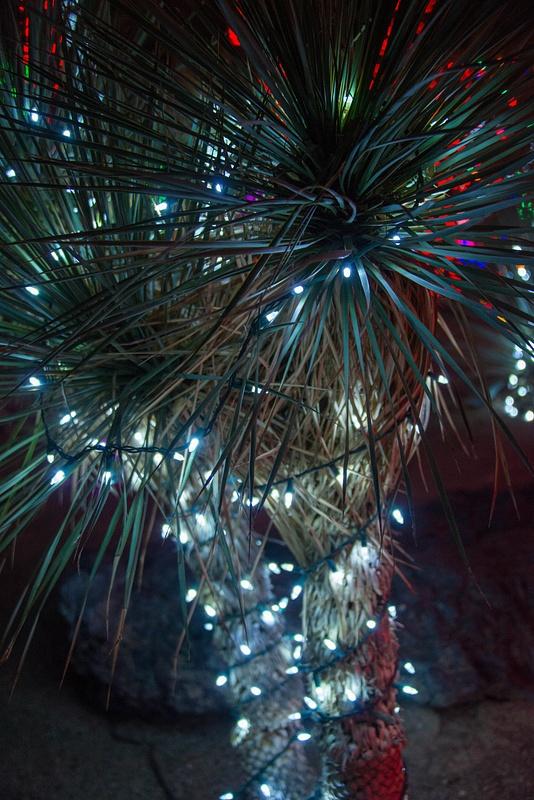 Palms lit up overhead.