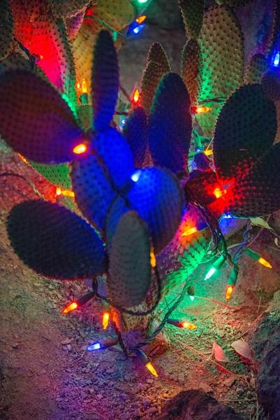 2017Nov Ethyl M Cactus Garden Holiday Lights LV NV by...