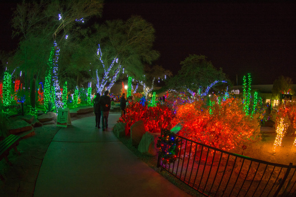 Taking a stroll through the colorful cactus by Willis...