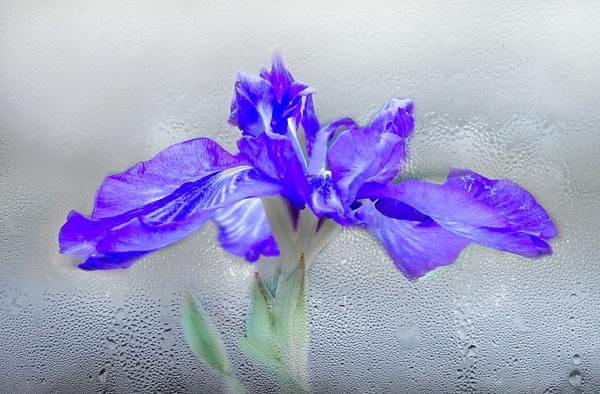 Floral by Ellen Lee