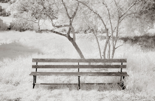 2F infrared by Ellen Lee
