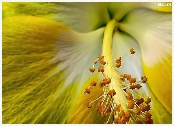 Flora  Fauna 15